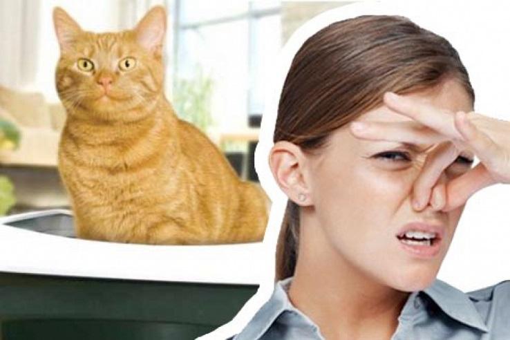 Запах мочи домашних животных в Саранске