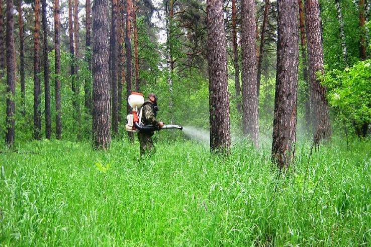Обработка от клещей лесных массивов в Саранске